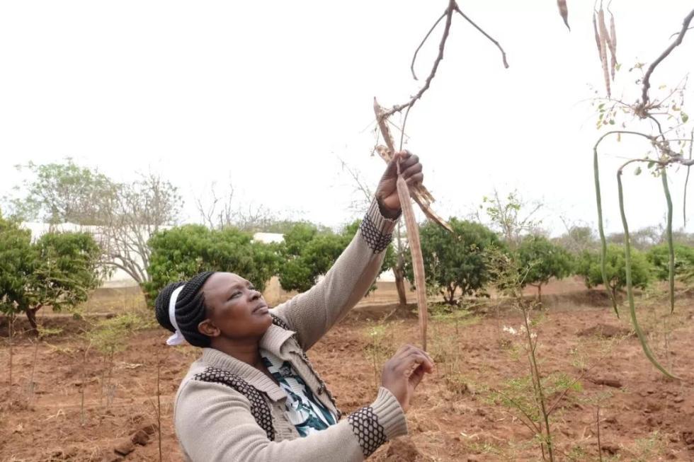 """种植""""奇迹之树"""",竟为非洲农妇换来一套两层别墅"""