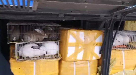岳阳高速交警查获一违法装载动物的大客车,车上竟然还有6只鸵鸟