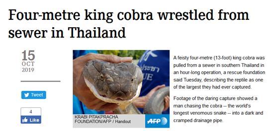 """<b>4米长毒蛇泰国居民区""""末路狂奔""""排水管道中挣扎无果终被捕</b>"""