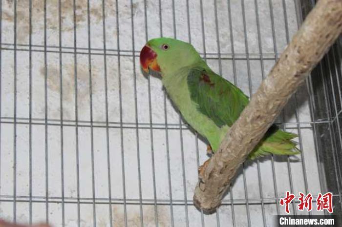 四川警方破获一起非法收购、出售43只鹦鹉案 12人被起诉