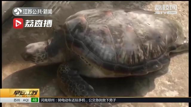 <b>半米长海龟被路人逮了售卖 爱心人士花3600买下来送其回大海</b>