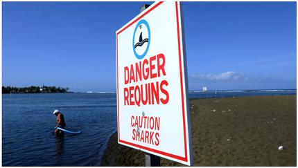 惊悚!英媒:鲨鱼胃里现断手,女子通过断手上婚戒认出是失踪的丈夫?!