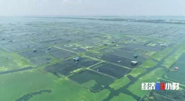 阳澄湖水质污染!你买的大闸蟹是从哪里来的?