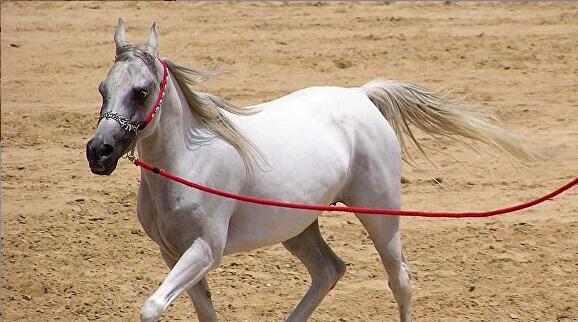 叙利亚旅行家骑马赴俄欲见普京赠骏马,30年前曾骑马去美国见了里根