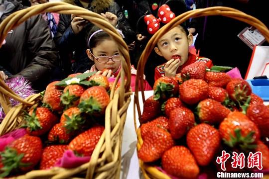 你想学吗?日本栃木县农业大学开设草莓专业