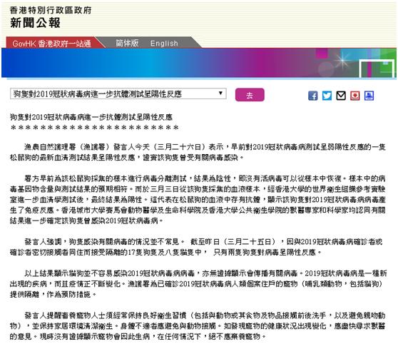 香港渔护署:早前呈弱阳性反应松鼠狗,最新血清检测证实曾感染新冠肺炎