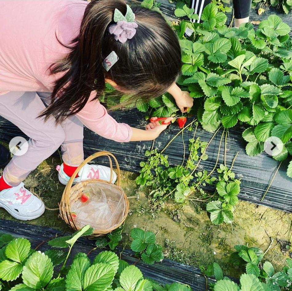 梁咏琪带女儿回归大自然摘草莓 母女互动画面超温馨