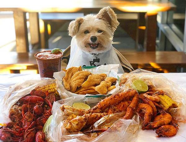 Popeye与许多美食物进行合照