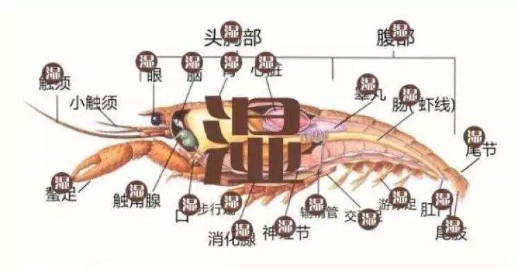 """△小龙虾扔起来很简单。""""垃圾去哪儿了""""微信公众号图"""