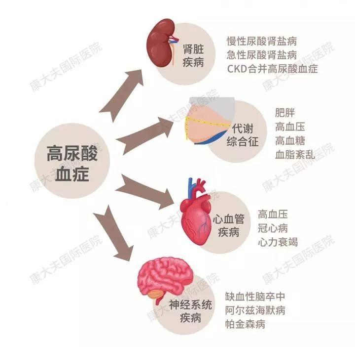 高尿酸血症的危害