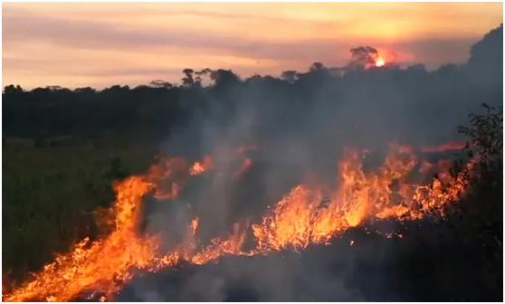 (大面积热带雨林正在燃烧。图源:路透社)