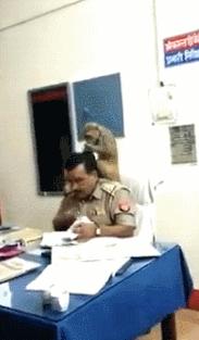 """被猴子坐肩頭""""找虱子"""",印度一警察仍埋頭工作超淡定"""