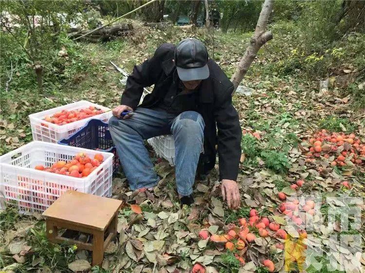 陕西一老板高薪招聘员工,要求很特别:会爬树!