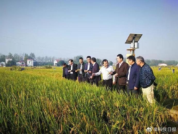 今年,双季稻合计均亩产1365公斤,创下了我国双季稻产量新高。 本文图片 @科技日报