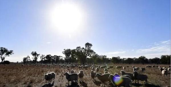 全国平均40.9摄氏度!澳大利亚经历有记录以来最热的一天